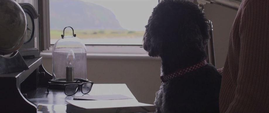 Teaser Video Five - Man's Best Friend Can Be No Better