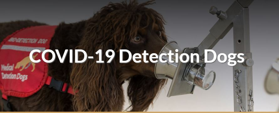 The Medical Detection Dogs